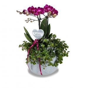 Muttertag Geschenk Orchidee