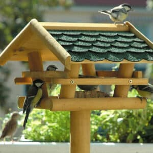 Vogelfutter & Nistkästen